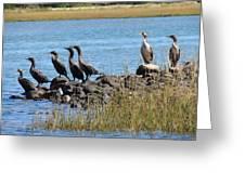 Sunbathing Cormorants  Greeting Card