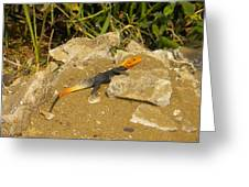 Sunbathing Lizard Greeting Card