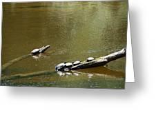 Sunbathing Turtles Greeting Card