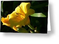 Sunbeam Greeting Card