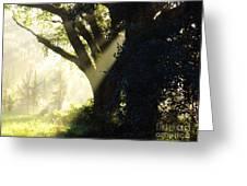Sunbeam Tree Greeting Card