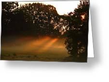 Sunbeams And Fog Greeting Card