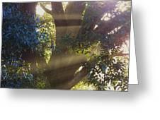 Sunbeams In The Tree Greeting Card