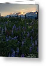 Sunbeams Over Rainier Greeting Card