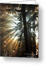 Sunbeams Through Trees Greeting Card