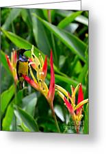 Sunbird On Heliconia Ginger Flowers Singapore Greeting Card