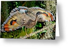 Sunbittern Displaying Greeting Card