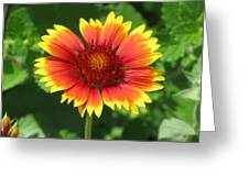 Sunburst 03 Greeting Card