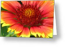 Sunburst 05 Greeting Card