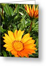 Sunburst 2 Greeting Card