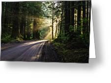 Sunburst At Redwood National Park Greeting Card