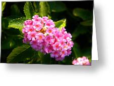 Sunday Morning Pink Greeting Card