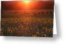 Sundown On Buttonwood Farm Greeting Card by Andrea Galiffi