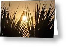 Sundown Through The Grass Greeting Card