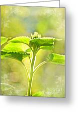 Sundrenched Sunflower - Digital Paint Greeting Card