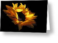 Sunflower 1045 Greeting Card