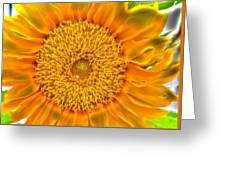 Sunflower 5 Greeting Card