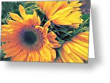 Sunflower A Greeting Card