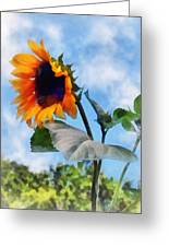 Sunflower Against The Sky Greeting Card by Susan Savad