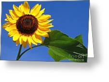 Sunflower Alone Greeting Card