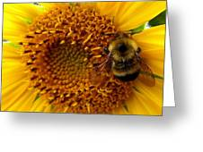 Sunflower And A Bee Greeting Card