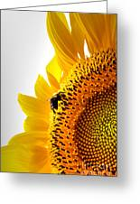 Sunflower And Bee 2 Greeting Card