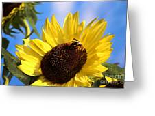 Sunflower And Bee-3879 Greeting Card