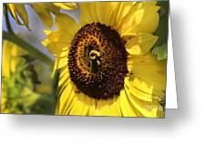 Sunflower And Bee-3922 Greeting Card