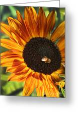 Sunflower And Bee-4041 Greeting Card