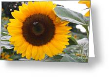 Sunflower And Bee Greeting Card