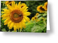 Sunflower And Bee II Greeting Card