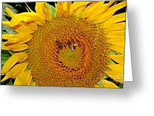Sunflower And Bees Greeting Card
