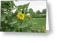 Sunflower And Cornfield Greeting Card