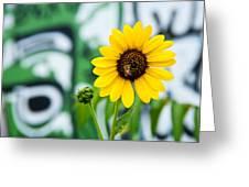 Sunflower And Graffiti  Greeting Card