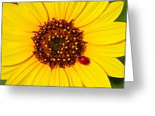 Sunflower And Ladybird Beetle 2am-110490 Greeting Card