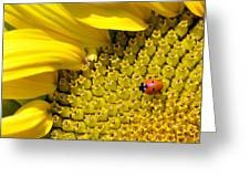 Sunflower And Ladybug Greeting Card