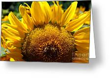 Sunflower And Two Bees Greeting Card