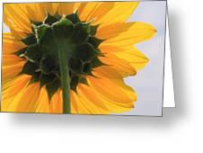 Sunflower Back Greeting Card