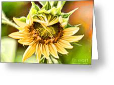 Sunflower Beauty - Painterly Greeting Card
