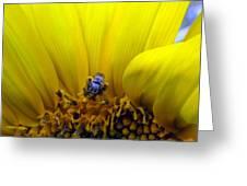 Sunflower Bee Greeting Card