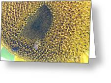 Sunflower Bees Greeting Card
