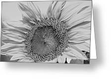 Sunflower Black And White Greeting Card