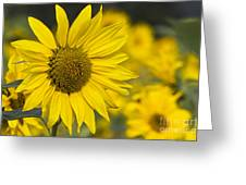Sunflower Blossom Greeting Card