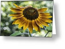 Sunflower Bokeh Greeting Card