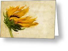 Sunflower Breezes Greeting Card by Nikki Marie Smith