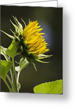 Sunflower Bright Side Greeting Card