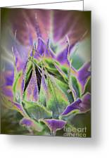 Sunflower Bud Abstract Greeting Card