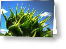 Sunflower Bud Closeup Against Blue Sky Greeting Card