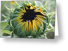 Blooming Sunflower Greeting Card