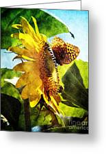 Sunflower Butterfly And Bee Greeting Card